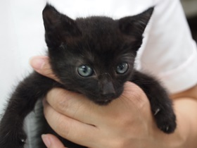 かわいい黒猫ちゃんです