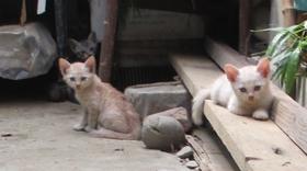 可愛い仔猫たち